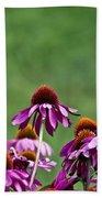 Echinacea Purpurea Beach Towel