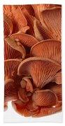 Edible Fungi 2 Beach Towel