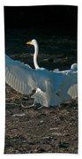 Egret Showing Off Beach Towel
