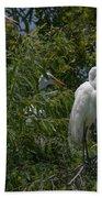 Egrets In Tree Beach Towel
