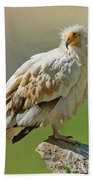 Egyptian Vulture Beach Towel
