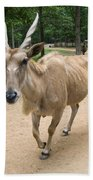 Eland Antelope Out In The Open Beach Towel