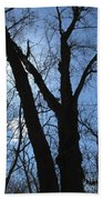 Elder Maple Silhouette Beach Towel