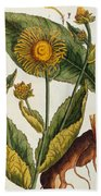 Elecampane Beach Towel by Elizabeth Blackwell