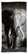 Elephant Bull Beach Towel
