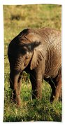 Elephant Calf Beach Towel