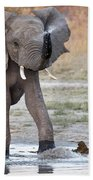 Elephant Calf Spraying Water Beach Towel