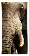 Elephant Close-up Portrait Beach Towel by Johan Swanepoel