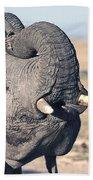 Elephant Curling Trunk Beach Towel