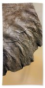 Elephant Ear Close-up Beach Towel