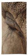Elephant Lashes Beach Towel