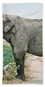 Elephant Roadblock Beach Towel