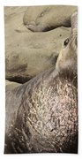 Elephant Seal Beach Towel