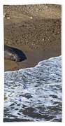 Elephant Seal Sunning On Beach Beach Towel