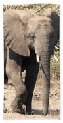Elephant Stroll Beach Towel