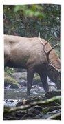 Elk Drinking Water From A Stream Beach Towel