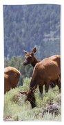 Elk Family - Yellowstone N P Beach Towel