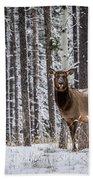 Elk In Jasper Beach Towel