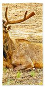Elk In Kiabab National Forest Arizona Beach Towel