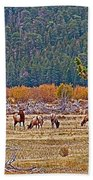Elk Near Cub Lake Trail In Rocky Mountain National Park-colorado  Beach Towel