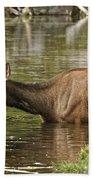 Elk Pictures 36 Beach Towel