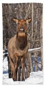 Elk Pictures 50 Beach Towel
