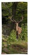 Elk Pictures 82 Beach Towel