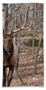 Elk Pictures 86 Beach Towel