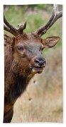 Elk Staring Beach Towel