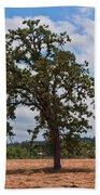 Elm Tree In Hay Field Art Prints Beach Towel