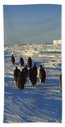 Emperor Penguin Group Walking On Ice Beach Towel