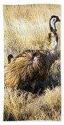 Emu Chicks Beach Towel