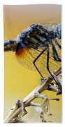 Enchanting Dragonfly Beach Towel