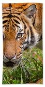 Endangered Species Sumatran Tiger Beach Towel