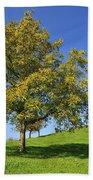 English Black Walnut Tree Switzerland Beach Towel