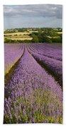 English Lavender Near Alton In Hampshire Beach Towel