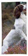 English Springer Spaniel Dog Beach Towel
