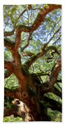 Entangled Beauty Beach Towel by Karen Wiles