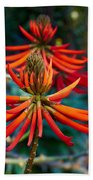 Erythrina Speciosa Beach Towel