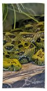 Ethiopian Mountain Vipers Beach Towel