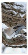 Eurasian  Collard Doves Beach Towel