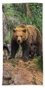 Eurasian Brown Bear 14 Beach Towel