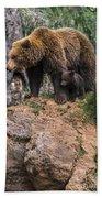Eurasian Brown Bear 15 Beach Towel