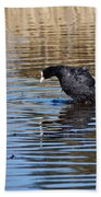 Eurasian Coot Beach Towel