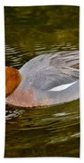Eurasian Wigeon Feeding Beach Towel