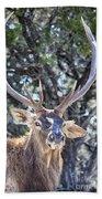 European Red Deer Beach Towel