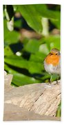 European Robin Beach Towel