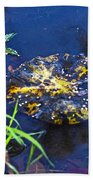 Evening Encloses The Aging Lily Pad Beach Towel