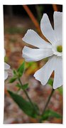 Evening Lychnis Beach Towel