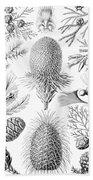 Examples Of Coniferae From Kunstformen Beach Towel by Ernst Haeckel